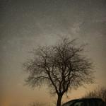Die Milchstraße über einem Baum (Carsten Jonas)